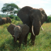 Wildlife Safari Tours and Travels