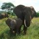 Wildlife Safari Tours and Travels